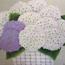 Reinhardt Wellington White and Lavender Hydrangeas