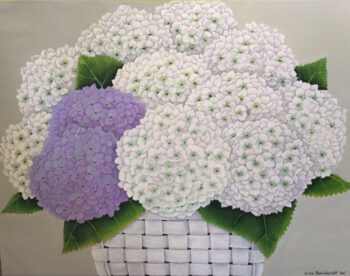 Reinhardt Wellington White and Lavender Hydrangeas